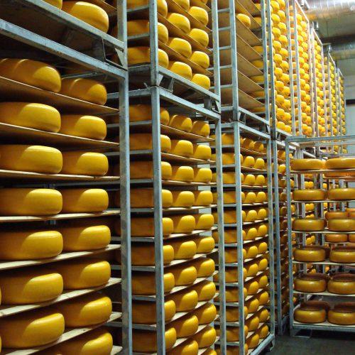 ons-huidige-kaasbedrijf